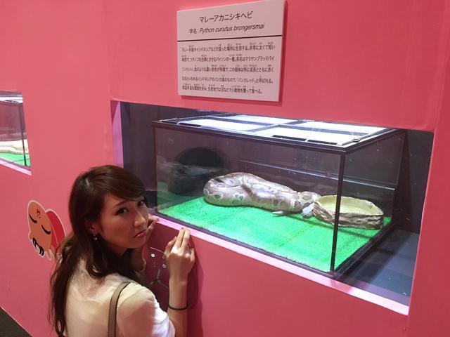 画像: マレーアカニシキヘビ 小動物を主に食べるそう。怖い。