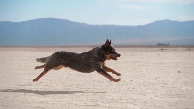 画像: 疾走することに魅了されたように、夢中で砂漠を駆け抜ける犬・・・。この作品は、ここからはじまります。 www.youtube.com