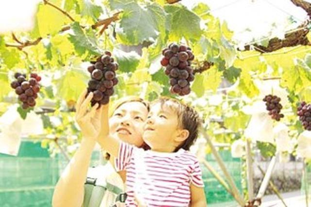 画像: www.jalan.ne