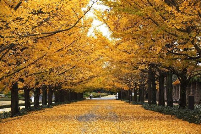 画像: 画像提供:国営昭和記念公園