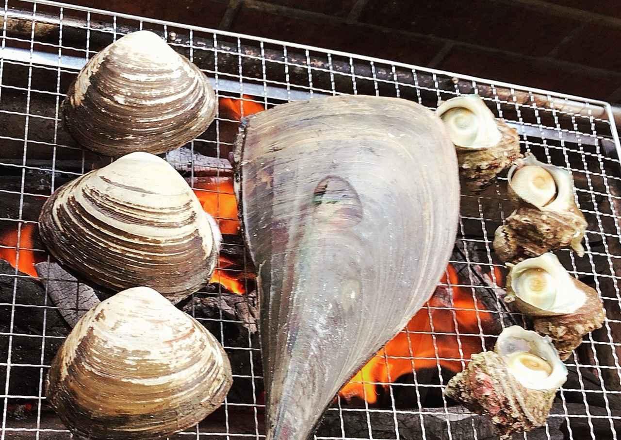 画像: 貝好きなので色々買ってみました!真ん中のは平貝です!でかい。笑