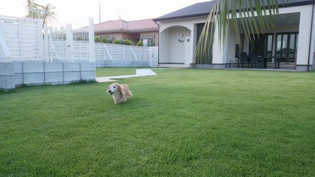 画像: ペットフレンドリーリゾート(PFリゾート) 愛犬と泊まれる海辺のリゾート貸別荘