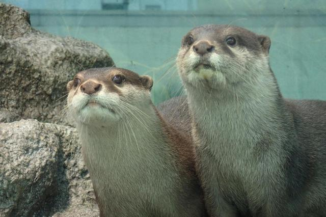 画像3: 水族館