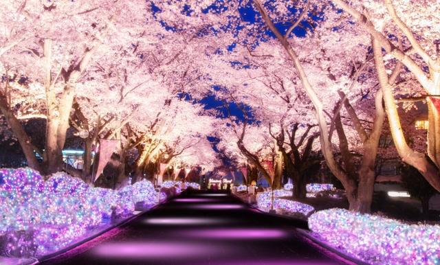 画像: 桜並木ライトアップイメージ