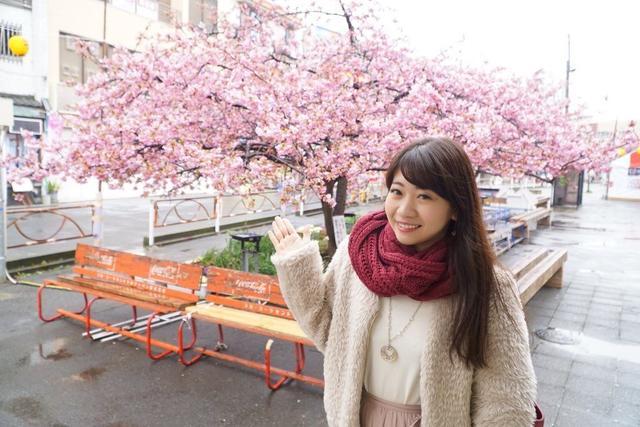 画像1: 三浦海岸桜まつり