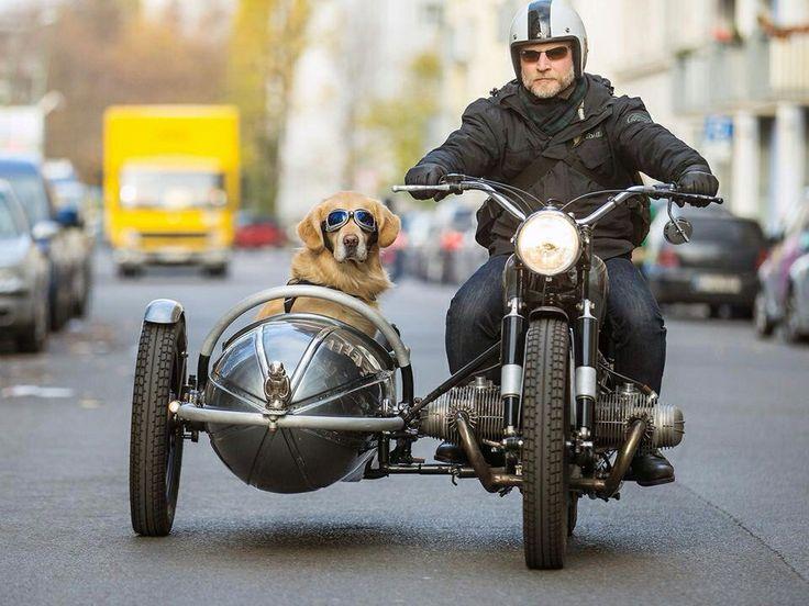 画像: 多くのサイドカーファンが憧れるBMWアウトフィット。犬と飼い主は似てくるといいますが、確かに表情がソックリ? s-media-cache-ak0.pinimg.com