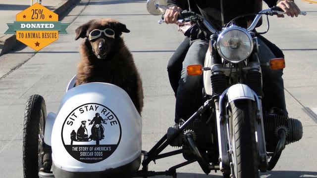 画像: Sit Stay Ride: The Story of America's Sidecar Dogs - Official Trailer youtu.be