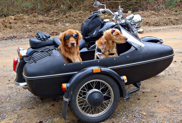 画像: 後ろのワンちゃんのドヤ顏がいいですね(笑)。 bostonbikers.files.wordpress.com