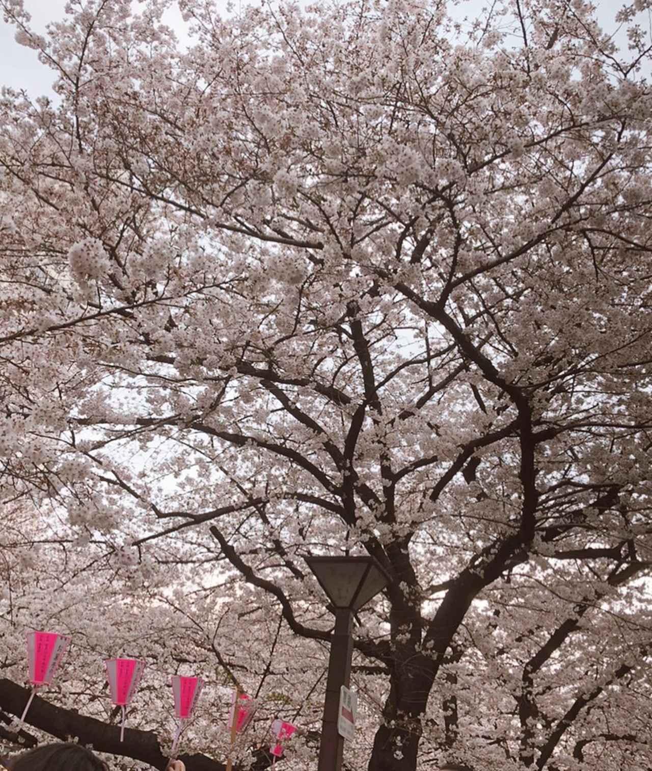 """画像2: """"平成最後の欲望""""は『令和スイーツ』!?ロレンス編集部の「コレがしたいアレが欲しい 2019年4月」 【水曜日のミク様】"""