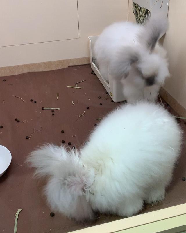 """画像1: Fukunaga Momoko on Instagram: """"【へんないきもの展3】行ってきたよ!! モフモフのアンゴラウサギちゃんめっちゃ可愛いo(。・‧̫・。)o♡︎♡︎ アルマジロトカゲやら亀やら沢山いて楽しーよ( ˙ꈊ˙ ) 紹介文がツボすぎてめっちゃ笑ったwwww . . #サンシャイン池袋 #へんないきもの展3…"""" www.instagram.com"""