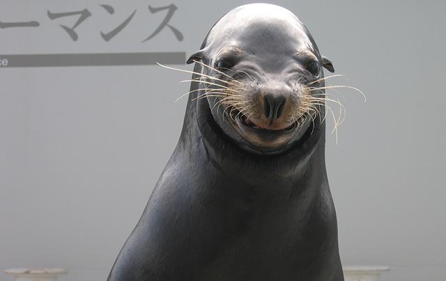 画像3: www.kamogawa-seaworld.jp