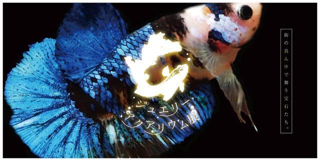 画像: ジュエリーアクアリウム公式サイト