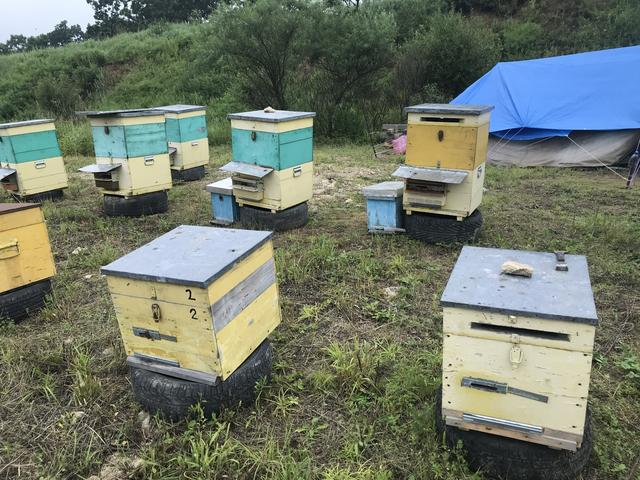 """画像: ハチミツはロシアの名産品のひとつで、幹線道路のロードサイドにはハチミツなどを販売する養蜂家を見ることができました。なお、かつてご実家では養蜂もしていたウラルジャパンCEOのブラドさんは、ロシアのハチミツは""""本物""""の味がしますよ! と胸を張っておりました。"""