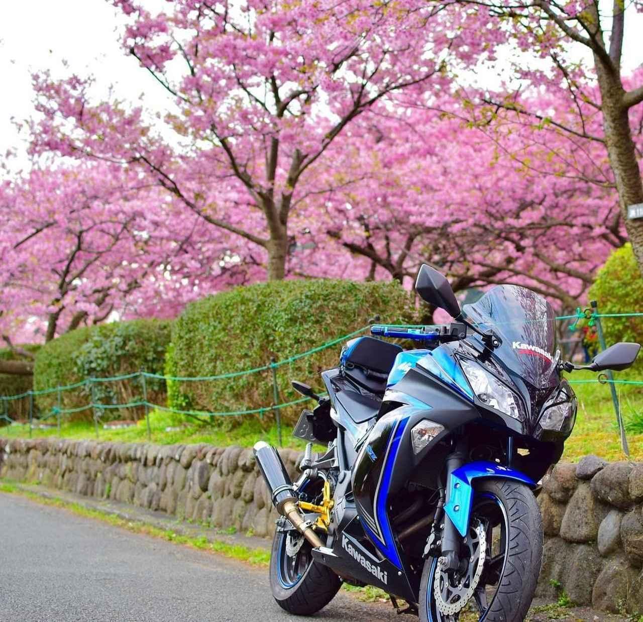 画像: 秋の顔も見たい…カワサキ Ninja250【グラカワインスタ投稿紹介vol.51】 - LAWRENCE - Motorcycle x Cars + α = Your Life.