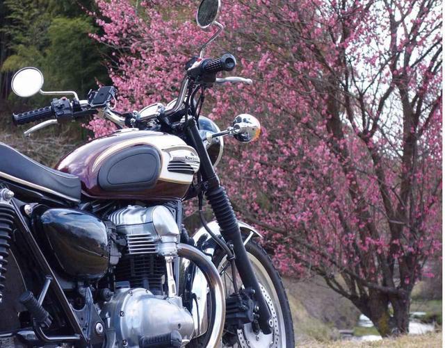 画像: クラシカルで美しいルックスの カワサキ W400【グラカワインスタ投稿紹介vol.53】 - LAWRENCE - Motorcycle x Cars + α = Your Life.