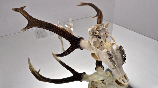 画像: 『鹿を歯医者に連れていく』:久保田沙耶