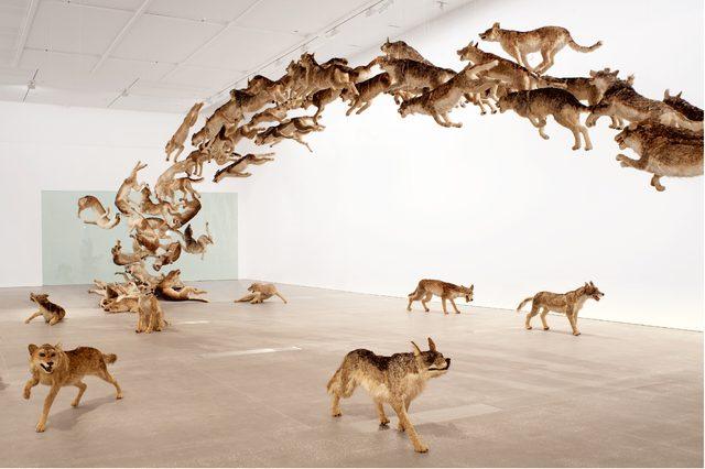 画像: 蔡國強《壁撞き》(画像転載不可) 99頭の狼のレプリカで構成されたインスタレーション