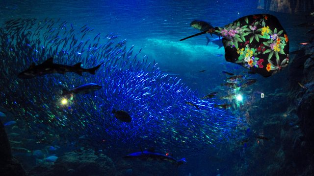 画像: メインコンテンツ「花と魚」が展開する相模湾大水槽
