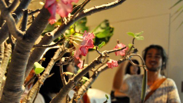 画像: 摩訶不思議幻想植物園《「ウルトラ植物博覧会」西畠清順と愉快な植物たち》ポーラミュージアムアネックス
