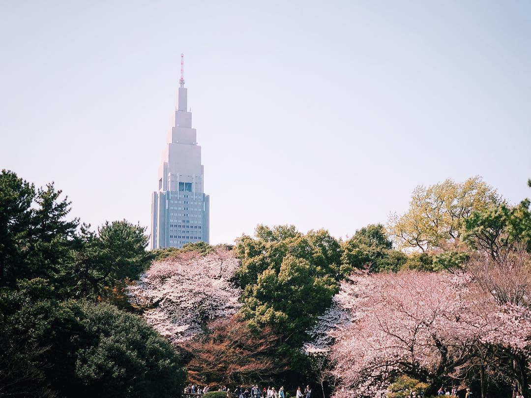 """画像1: s̲̅e̲̅o̲̅z̲̅o̲̅ on Instagram: """"#tokyotravel #新宿 #tokyo #shinjuku #新宿御苑 #東京 #東京旅行 #shinjukugyoen #도쿄 #일본여행 #벚꽃 # #さくら #iphonexs #신주쿠교엔 #nttdocomo"""" www.instagram.com"""