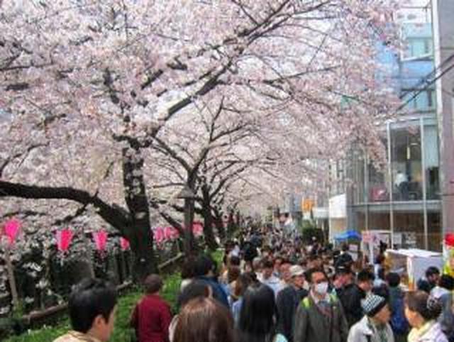 画像: 目黒川沿いの桜を見にいらっしゃる方へ 目黒区
