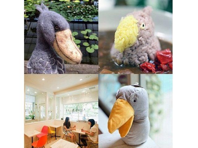 画像: 思わず釘付け!何ともユーモラスなハシビロコウカレーが「ことりカフェ」にやってくる!!