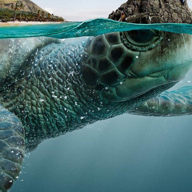 画像: ガラパゴス諸島が大きなカメだった?大自然と動物の魅力を表現したアート作品