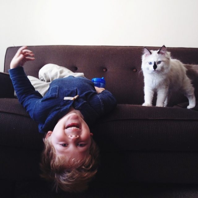 """画像: まるで天使!""""猫と男の子""""の友情を捉えたフォト作品が可愛すぎる"""