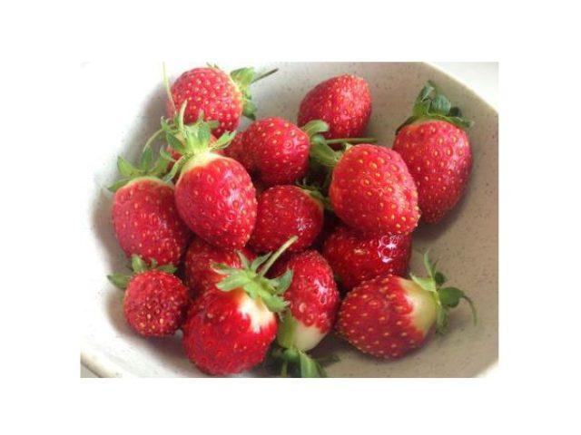 画像: 新鮮な摘みたてイチゴがその場で味わえる、六甲山に夏採り体験農園がオープン!