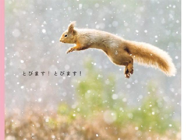 画像: 「とびます!とびます!」見てるとやる気が湧いてくる、海や陸の動物までみーんな跳んでる写真集