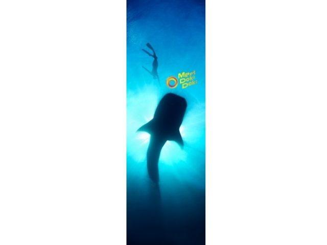 画像: 自由研究にぴったり?!銀座ソニービルで開催中の「48th Sony Aquarium」でサメ博士になろう!入場・体験は無料