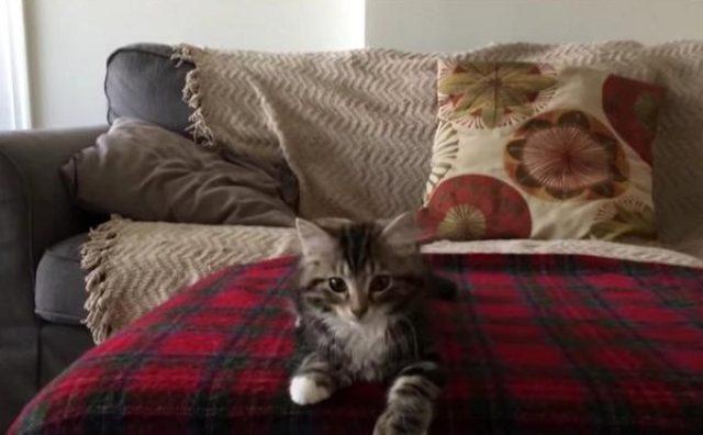 画像: 胸キュン必至!ヒット曲に合わせて踊るファンキーな子猫がかわいすぎる