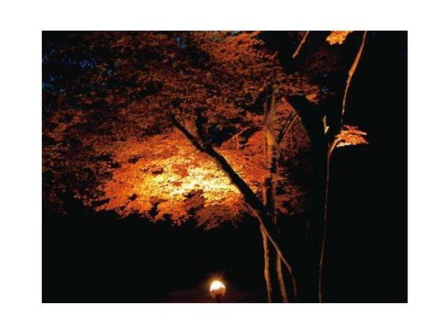 画像: 関西エリアの山ガールは見逃さないで! 六甲高山植物園の紅葉ナイトツアー予約受付開始!