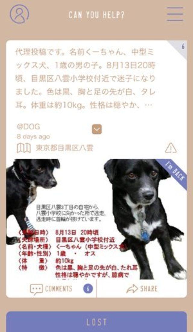 画像: 迷子犬の発見アプリ『FINDOG』で半径6キロ以内の情報をシェアしよう!