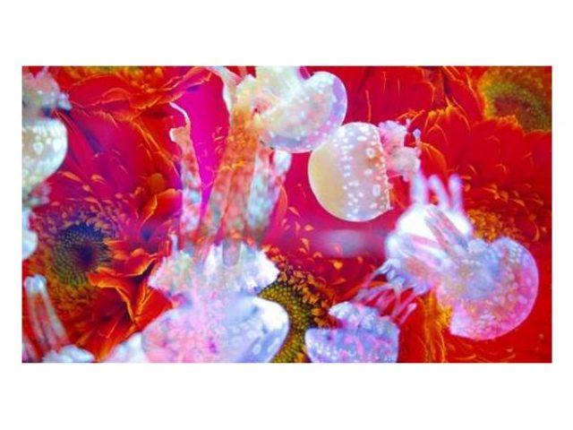 画像: すみだ水族館で幻想的なクラゲアートが楽しめる!蜷川実花さんとのコラボ企画開催!!