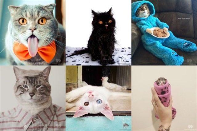 画像: 【Instagram】猫好きはフォロー必死!可愛い猫たちを毎日たくさん眺めよう♪