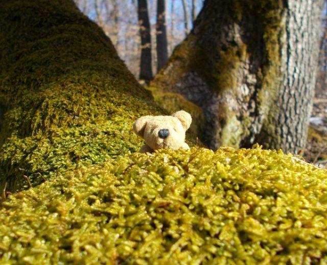 """画像: 大自然の中悠々自適に暮らす""""小さなクマ""""が話題に"""
