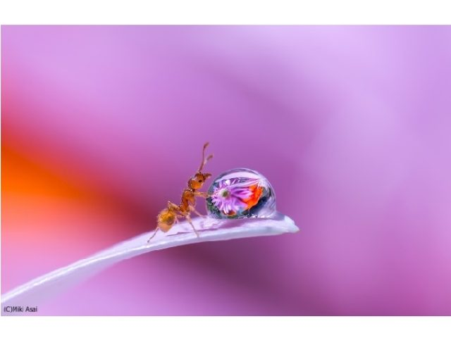 画像: 「どんな宝石よりも美しい」アリしか知らないミクロの世界に、神秘と美しさと幸せを感じる写真展