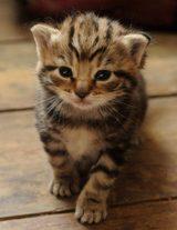 画像: 猫カフェの次はこれ!ニャンコとお酒を楽しむ「猫パブ」が話題に
