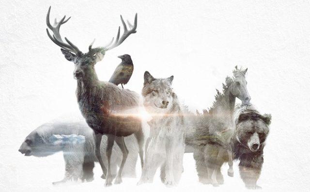 画像: 野生動物の向こうに何が見える?美しいアニメーションに込められたメッセージとは