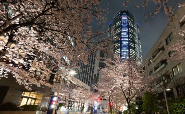 画像: 桜のライトアップにグルメ屋台...六本木ヒルズで都心のゴージャスなお花見を楽しもう