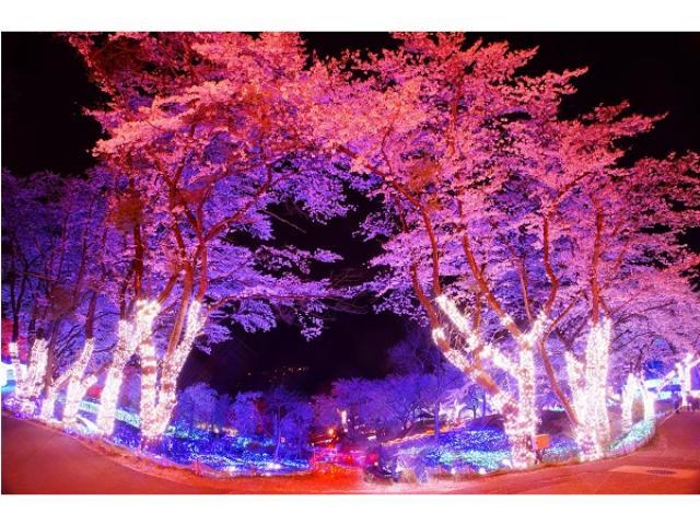 画像: 艶やかな夜桜、さがみ湖イルミリオンで関東最大級の豪華な光と桜の饗宴を満喫しない?