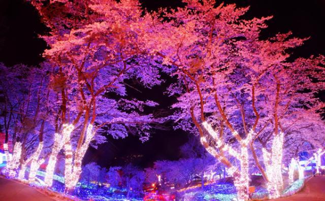 画像: 圧巻のスケール!夜桜イルミネーションがさがみ湖リゾートで開催