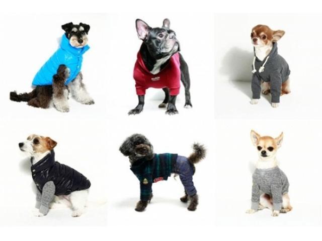 画像: 無料&先着順!日本最大級のペットイベントにて、新進気鋭のフォトグラファーに愛犬を撮影してもらわない?