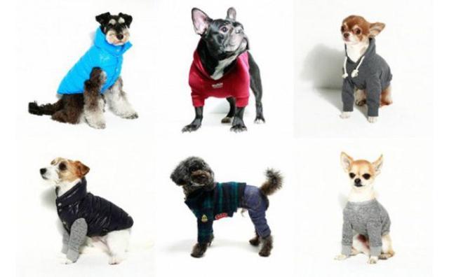 画像: 愛犬がペットモデルに大変身!?プロの写真家による無料撮影会が開催