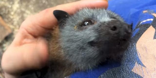 画像: まるで子犬!飼育員に撫でられてうっとりしている意外な生物に驚きの声