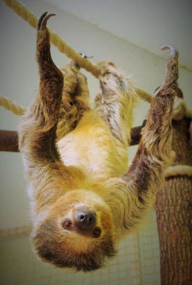 画像: やめてあげてwおサルさんにエサを取られたナマケモノの反応が笑える!