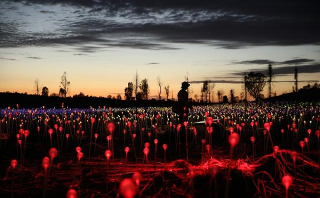 画像: 大地に咲き誇る光の花♡幻想的なアートに癒やされる