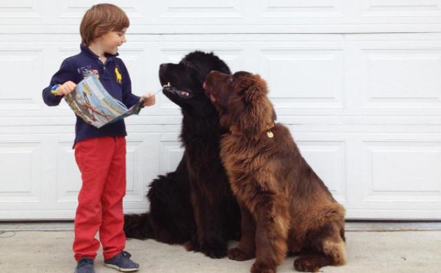 画像: 友情にほっこり♡2匹の大型犬と少年の成長記録
