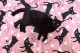 画像1: シーツの柄にそっくりな黒猫の姿が可愛すぎると、Twitterで話題になっています。 シーツの柄とそっくりなニャンコ この画像を投稿しているのは、ゆうき(@yuukirg3)さん。 シーツの柄に溶け込んでて危うく踏んじゃうとこだった 笑 pic.twitter.com/WTNqTqMOlh — ゆうき (@yuukirg3) 2016年5月24日 画像には、シーツの上でくつろいでいるくうちゃんの姿が写っています。 シーツにプリントされた黒猫の柄にそっくりなくうちゃん。 くうちゃんがシーツの柄に溶け込みすぎて、危うく踏んでしまいそうになったそうです。 確かに、一瞬、見ただけではシーツの柄とくうちゃんを間違えてしまうかも...。 くうちゃんの [...] irorio.jp